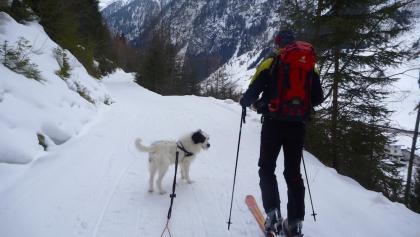 Aufstieg zur Verpeilhütte mit Wandre- und Kletterhund Sam