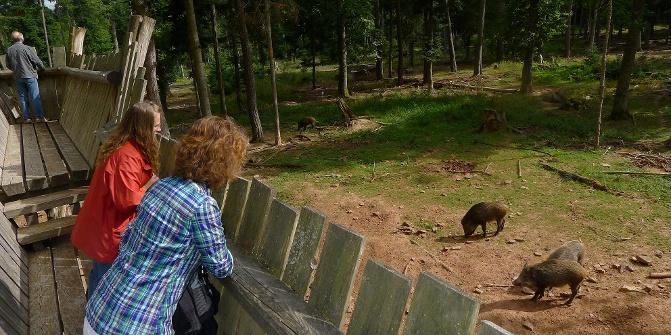 https://img.oastatic.com/img2/10333219/671x335r/blick-vom-aussichtssteg-ins-wildschweingehege.jpg