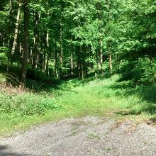 verwilderter Forstweg (km: 6,2) - Blick von unten
