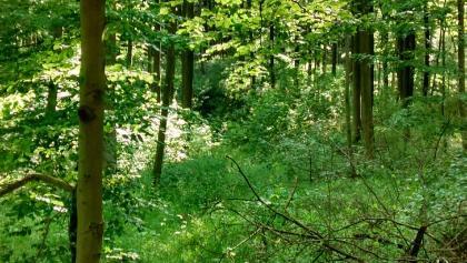 verwilderter Forstweg (km: 5,7) - Blick von oben