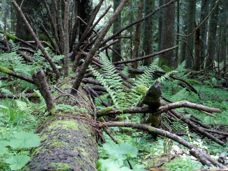 Durch den Urzeitwald