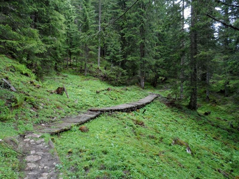 Auf Holzstegen durch den Wald