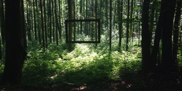 Im Erlebniswald gibt es besondere Einblicke