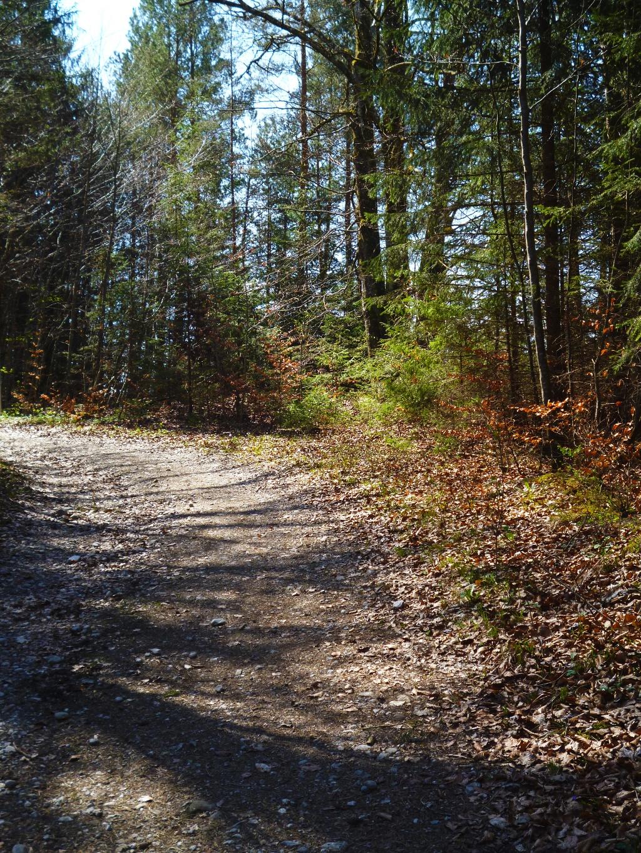 Auf ruhigen Forstwegen geht es durch den Wald in Richtung Frechensee. (Monika Heindl)
