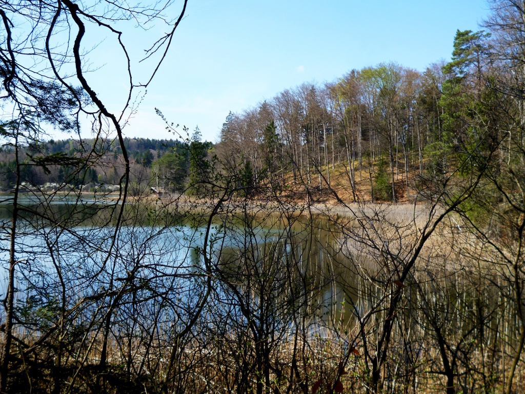Am Ostufer des Frechensees ist der Blick auf den See häufig durch Bäume verdeckt. (Monika Heindl)
