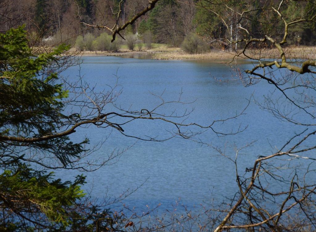 Ab und zu eröffnet sich - trotz der vielen Bäume - auch vom Ostufer ein freier Blick über den Frechensee. (Monika Heindl)