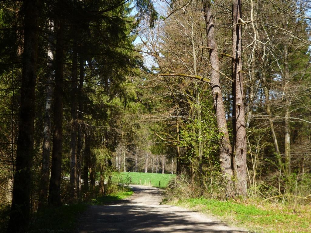Breite Schotterwege führen durch den Wald zurück in Richtung Seeshaupt. (Monika Heindl)
