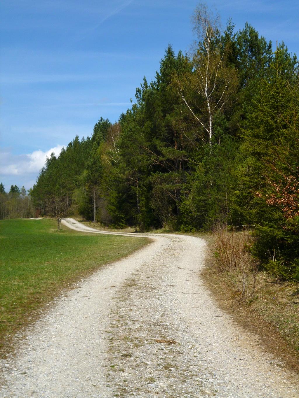 Am Waldrand entlang führt der Weg zurück in Richtung Seeshaupt. (Monika Heindl)