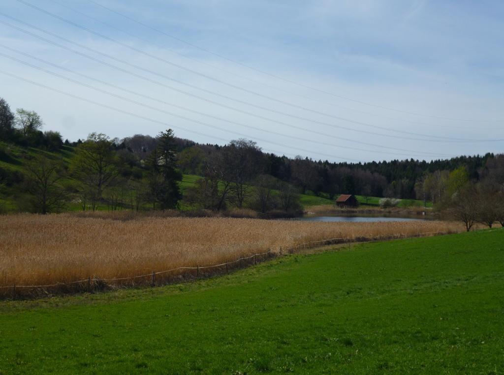 Blick vom Weg südlich des Weilers Eichendorf auf den Eichendorfer Weiher. (Monika Heindl)