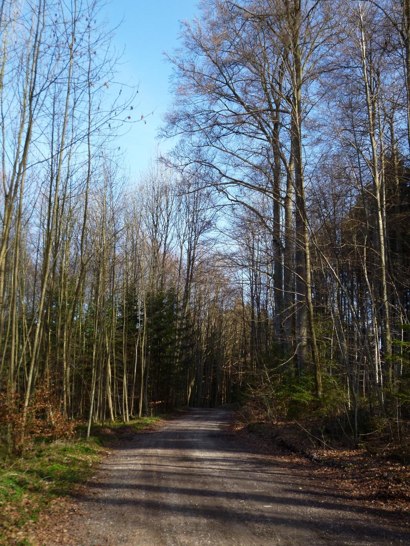 Breite Forstwege führen von der Lauterbacher Mühle in Richtung Ellmann. (Monika Heindl)