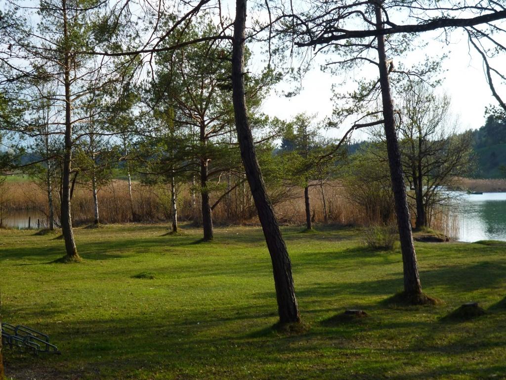 Auf der Liegewiese am Ostufer des Fohnsees spenden zahlreiche Bäume Schatten. (Monika Heindl)