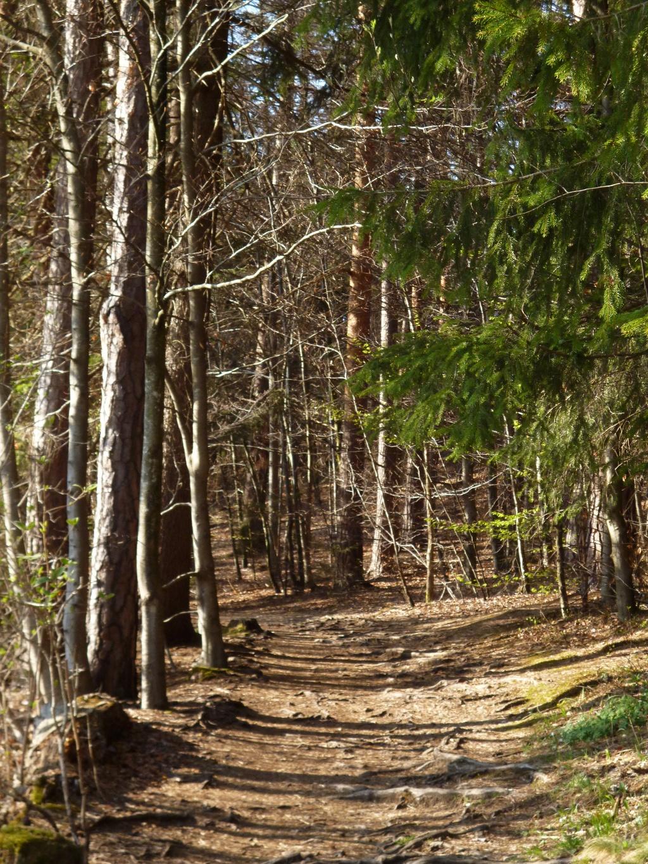 Über teils wurzlige Waldwege geht es am Fohnsee entlang. (Monika Heindl)