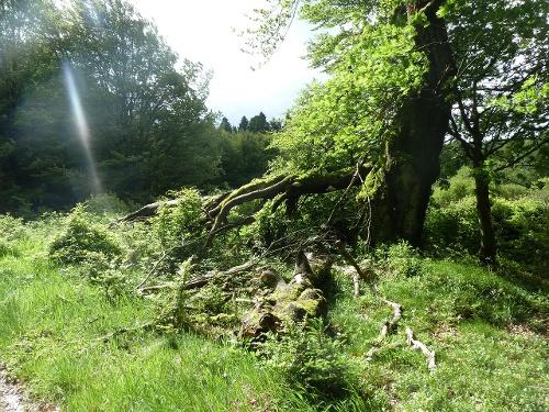 """Rundweg Naturschätze im Sauerland """"NSG Nasse Wiese"""" Bödefeld"""