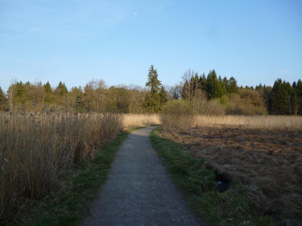 Ein schmaler Kiesweg führt durch das idyllische Moorgebiet südlich des Großen Ostersees und des Fohnsees. (Monika Heindl)