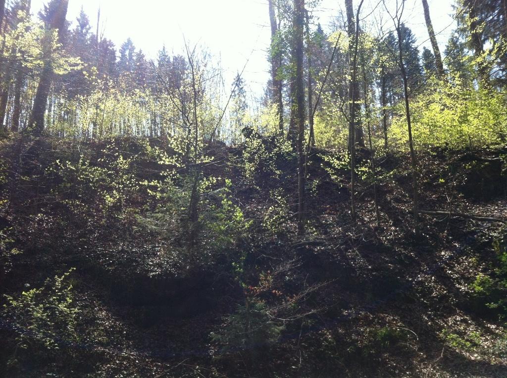 Der Brunnhäuslwald bei Steingaden (Antonie Schmid)
