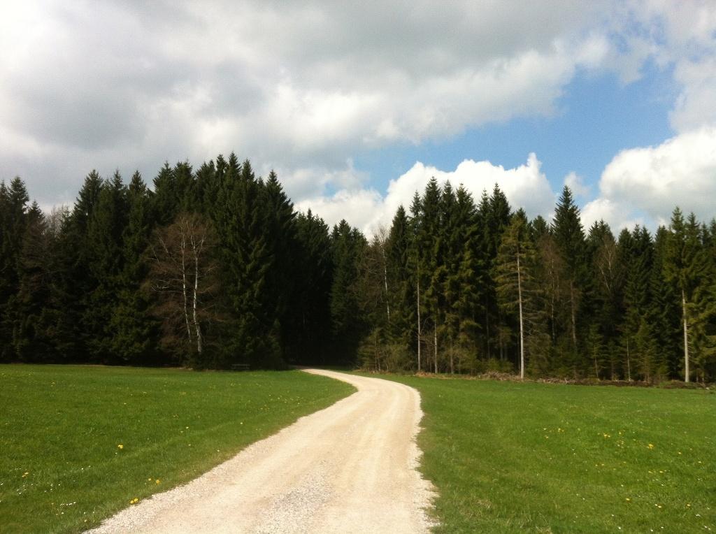 Ruhige Forstwege begleiten den Lauterbach-Rundweg (Antonie Schmid)