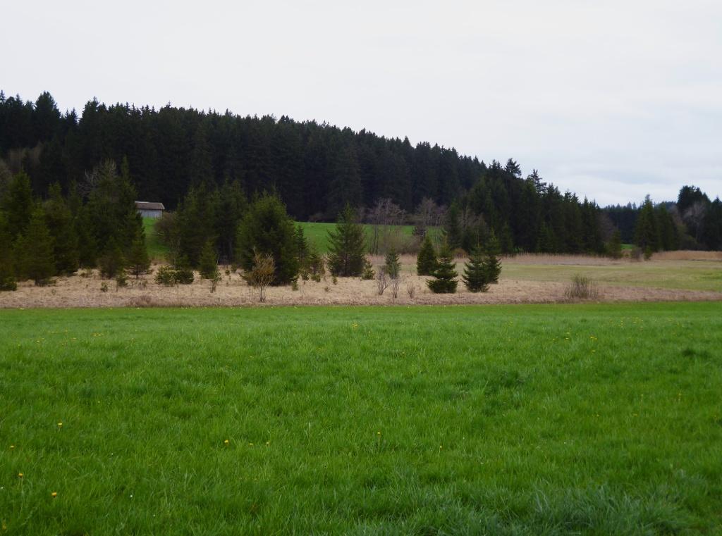 Südlich von Huglfing führt der Weg vorbei an weiten Wiesen- und Moorflächen. (Monika Heindl)