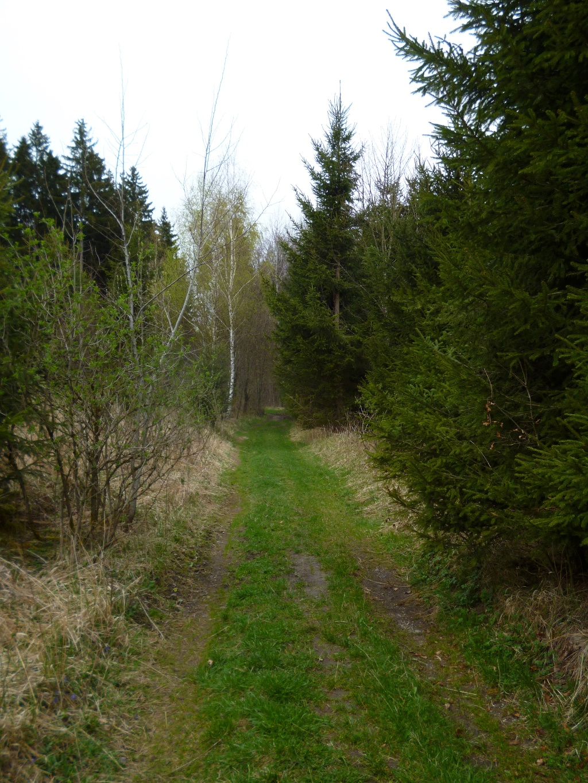 Undeutliche Fahrspuren führen nördlich von Tauting durch den Wald. (Monika Heindl)
