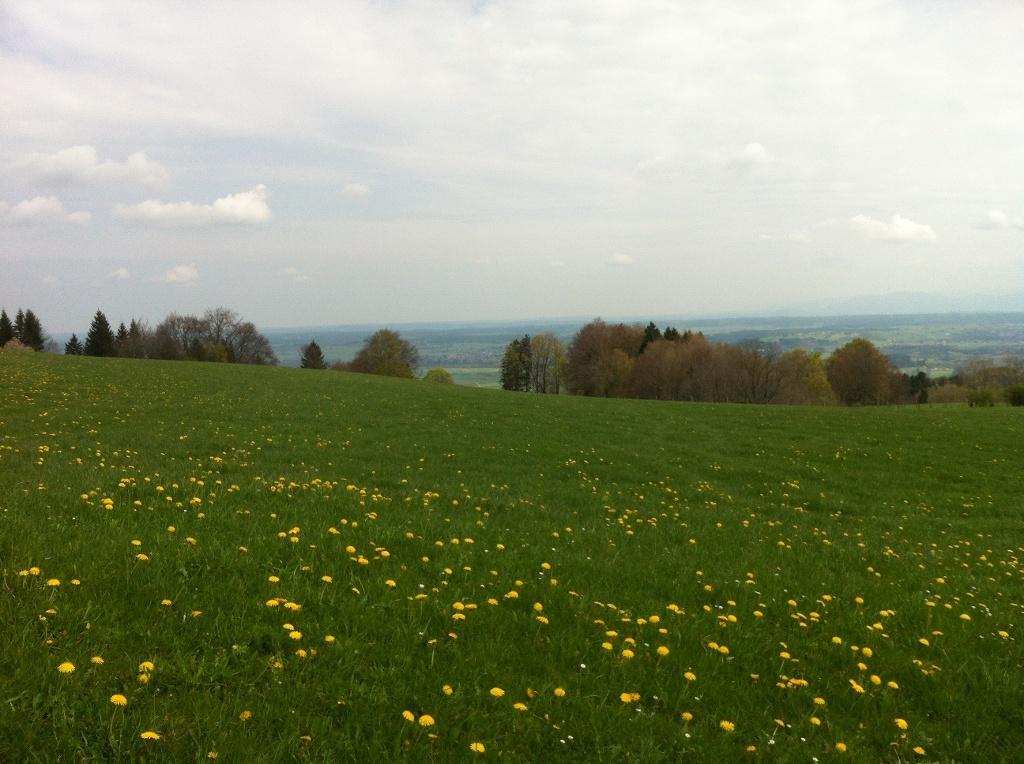 Alpenblick am Feldkreuz bei Oberschwaig (Antonie Schmid)