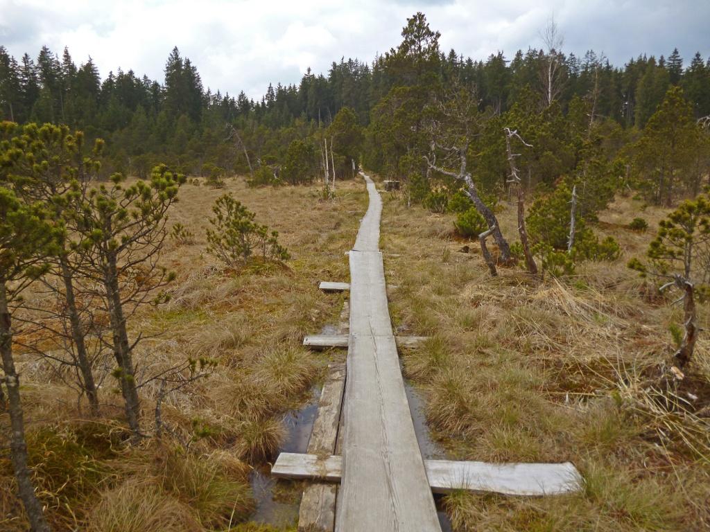 Der Brettleweg leitet über schmale Holzbohlen durch das Wiesfilz. (Monika Heindl)