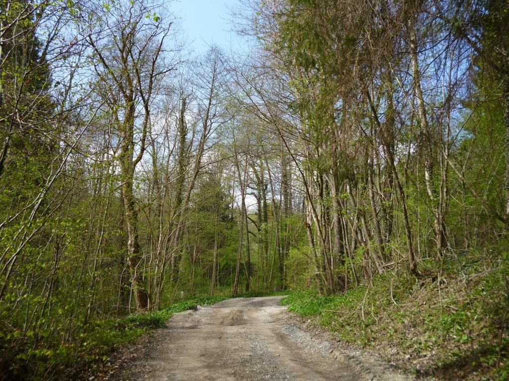Anfangs verläuft die Strecke noch auf breit ausgebauten Forstwegen. (Monika Heindl)