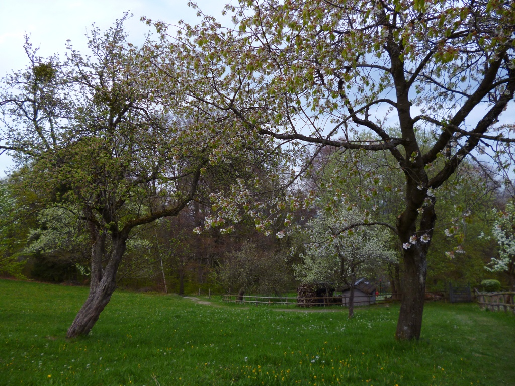 Ein Wiesenpfad führt am Weinbauer vorbei, bevor es steil hinunter nach Peißenberg geht. (Monika Heindl)