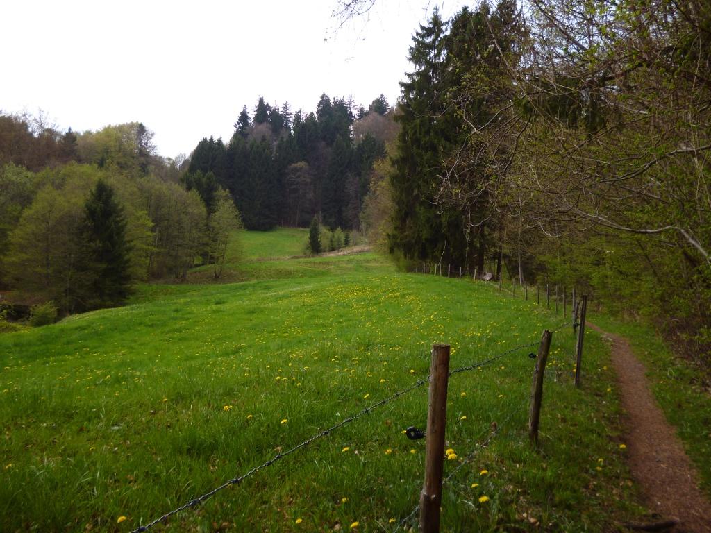 Idyllisch führt der schmale Pfad am Waldrand entlang vom Mittelstollen aufwärts Richtung Vorderschwaig. (Monika Heindl)