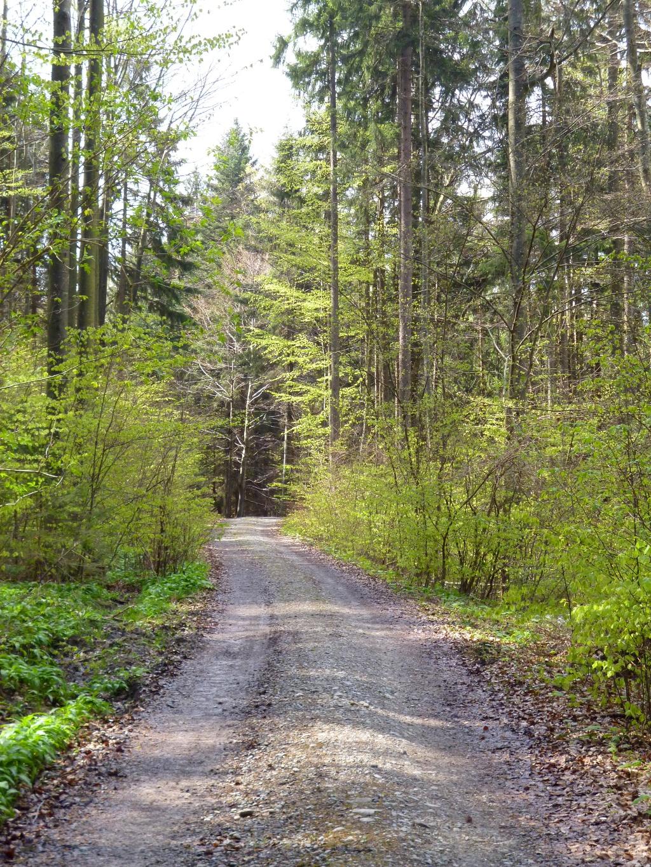 Zu Beginn geht es noch auf breiten Forstwegen durch den Wald. (Monika Heindl)