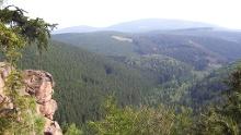 Luchswanderung Bad Harzburg