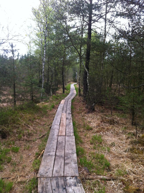 Auf einem Holzpfad durchqueren wir das weitläufige Sumpfgebiet. ()