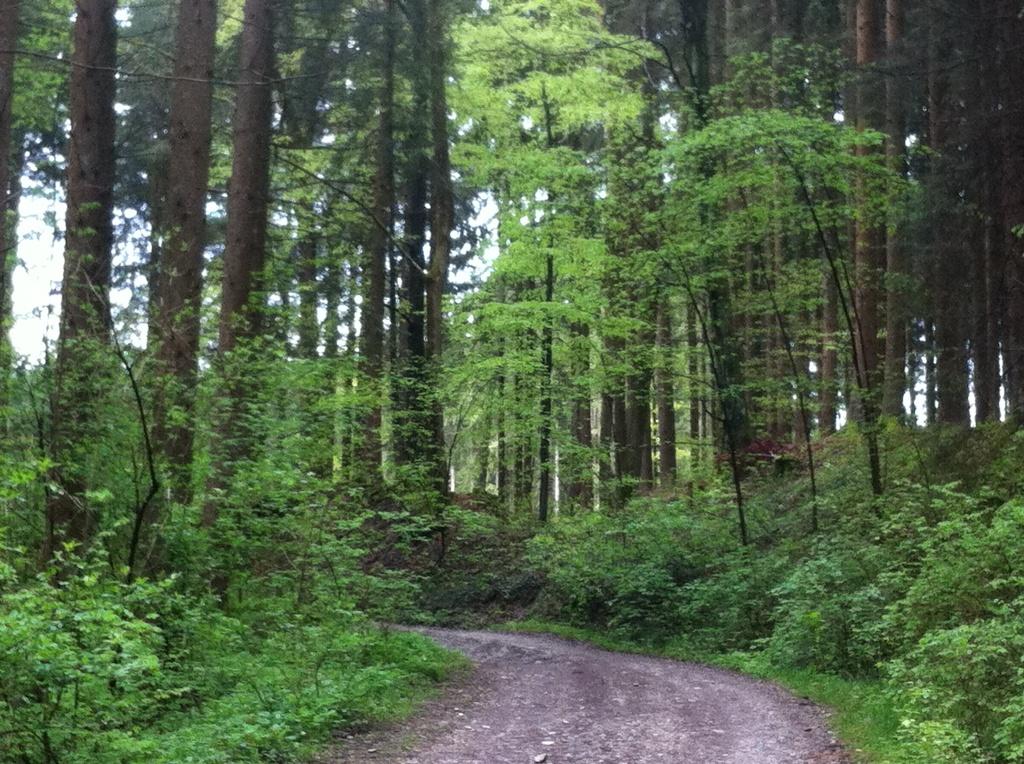 Wir passieren auf dieser Etappe malerische Wälder. ()