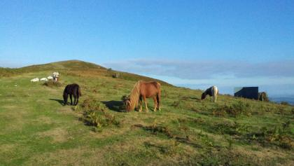 Ainhoa (Mt) Erebi Potocs (Chevaux des Pyrénnées)