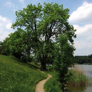 Ein Highlight dieser Tour ist der Sulzberger See.