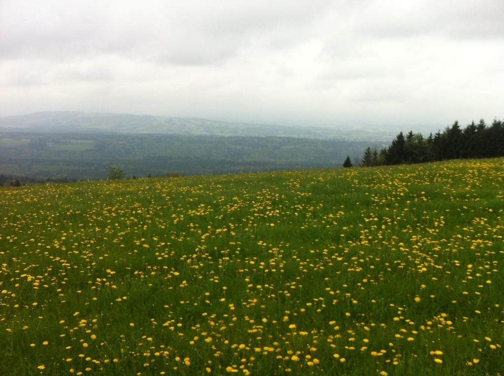 Weite Wiesen begleiten unseren Weg auf den Hohen Peißenberg. ()