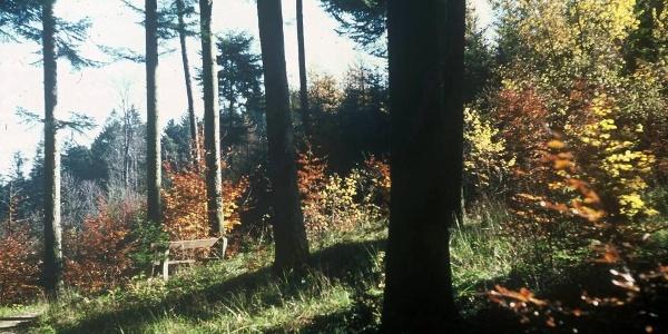 Uferinger-Filz-Weg