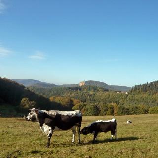 Blick vom Gimbelhof zur Burgruine Fleckenstein.