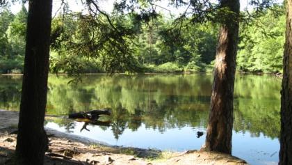 Wiesbütt-Teich