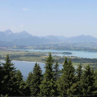 Blick über Bannwald und Forggensee