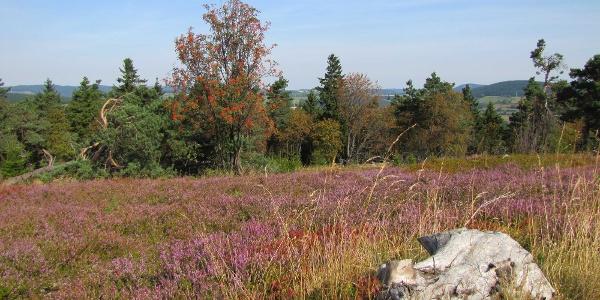 Usselner Heide