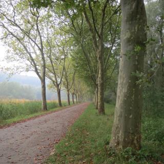 Bodenseeradweg Nähe Mainau