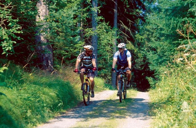 Foto Radfahrer im Wald