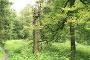 Naturwege auf dem Langenbergrundweg