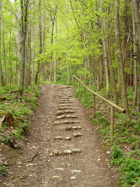 Über Wurzeln und Stufen führt der Wanderweg auf den Hohen Peißenberg. (Monika Heindl)