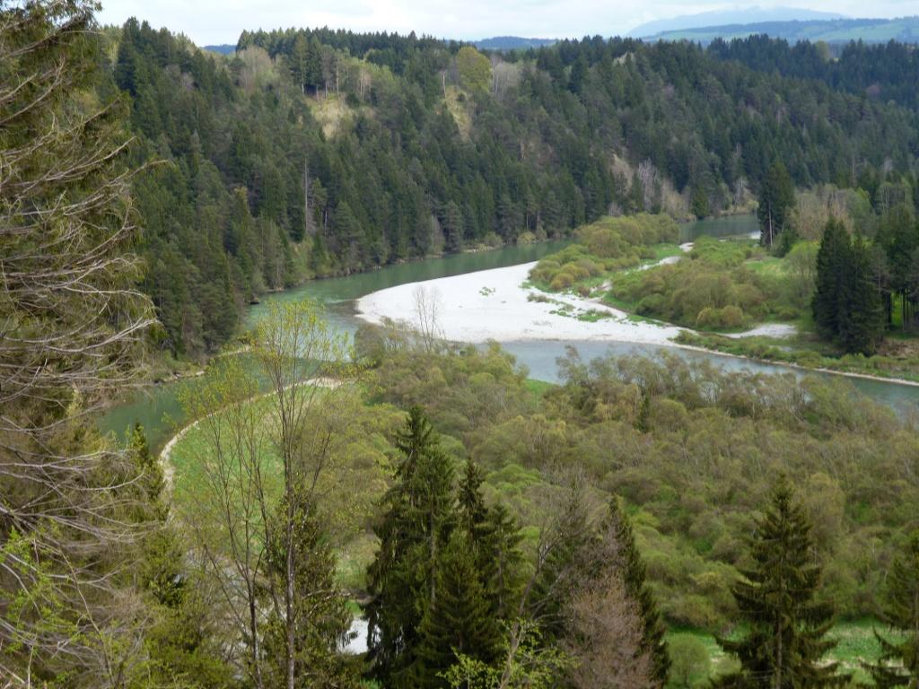 In der Litzauer Schleife ist der Lech noch wild und unverbaut. (Monika Heindl)