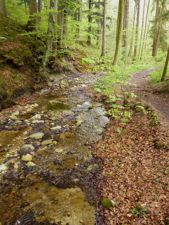 Teilweise führt der Weg direkt am Bach entlang. (Monika Heindl)