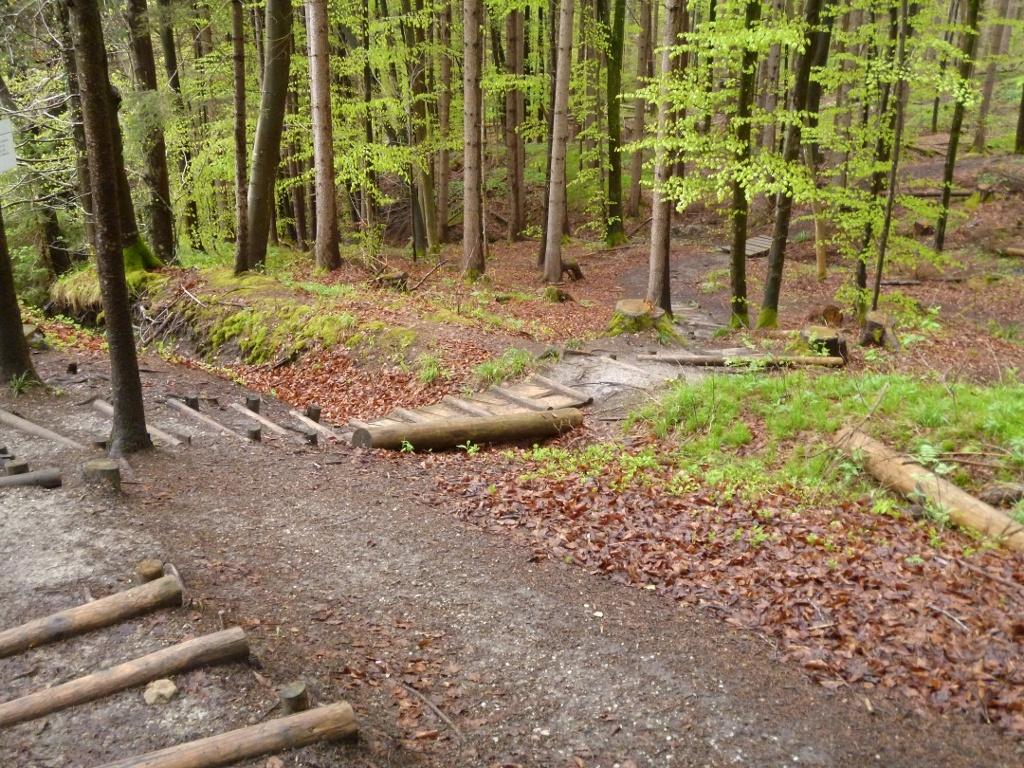 Über unzählige Stufen führt der Weg durch die wildromantische Ammerschlucht. (Monika Heindl)