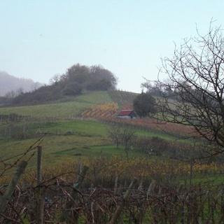 Weinbau am Schönberg.