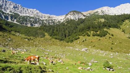 Auf den Hochalmen, direkt unterhalb des Gebirgskammes, sind die saftig grünen Wiesen schon mit Felsen versetzt.