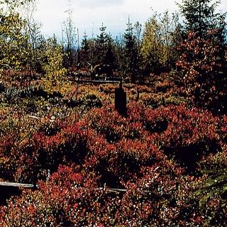Die romantischen Wälder des Fichtelgebirges.