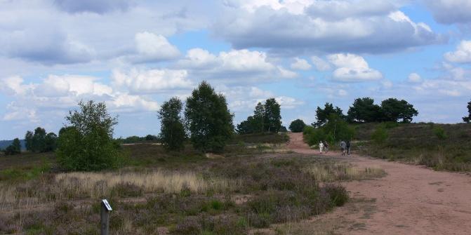 Das zweitgrößte Heideareal Deutschlands zieht viele Wanderer an.
